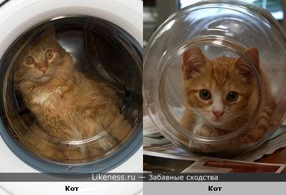 Белка и Стрелка по-кошачьи или Коты-космонавты
