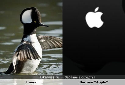 """Птица, отмеченная логотипом """"Apple"""""""