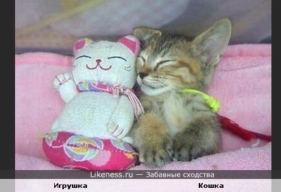 Кошечки улыбаются