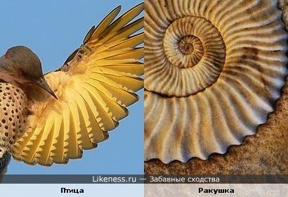 Крыло птицы и ракушка