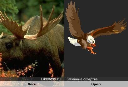 Рога орла как крылья птицы