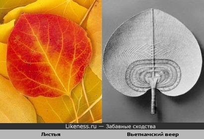 Лист напоминает веер