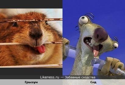 """Грызун и персонаж м/ф """"Ледниковый период"""""""