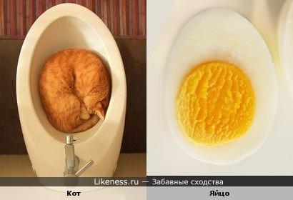"""Шалтай-болтай свалился во сне..."""