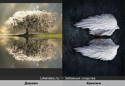 Цветущее дерево как крылья ангела