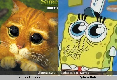 Кот из Шрека и Губка Боб на этих фотографиях похожи