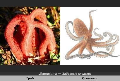 Гриб-осьминог