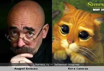 """Андрей Бильжо и кот из """"Шрека"""""""