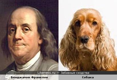 Собака напомнила Бенджамина Франклина