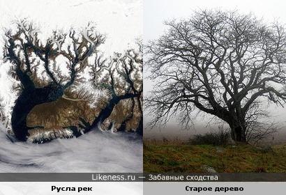 Русла рек из космоса похожи на старые деревья