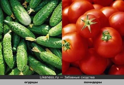 Огурцы походят на помидоры