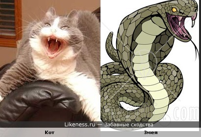 Котэ похож на змеэ
