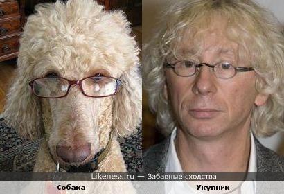 Собака, которая съест паспорт