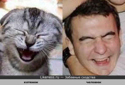 котенок и мужик похожи