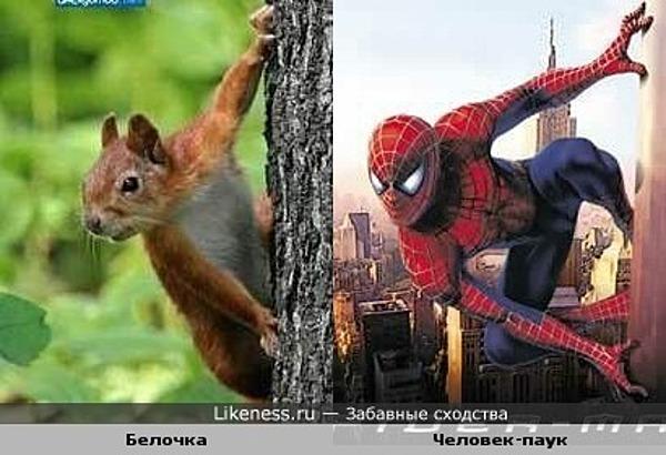 Белочка напоминает Человека-паука