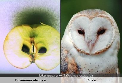 Половина яблока похожа на сову