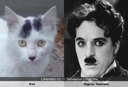 Этот кот похож на Чарли Чаплина