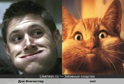 Дин Винчестер похож на кота, съевшего птичку