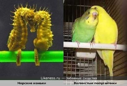 Морские коньки похожи на попугайчиков