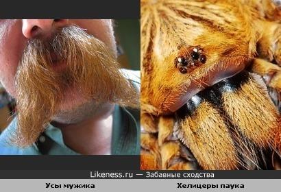 Усы мужика похожи на хелицеры паука