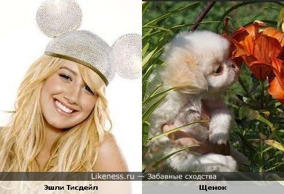 Эшли Тисдейл это щенок!!!!!!))))))