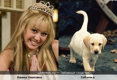Ханна Монтана это собачка!!!!!)))))