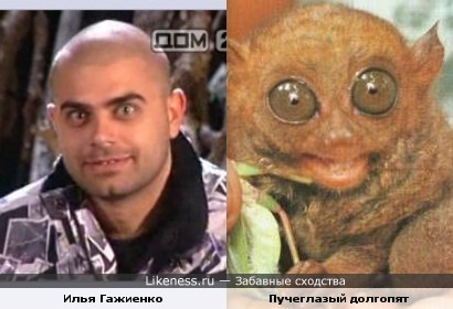 Гажиенко из Дома-2 в прошлой жизни явно был долгопятом