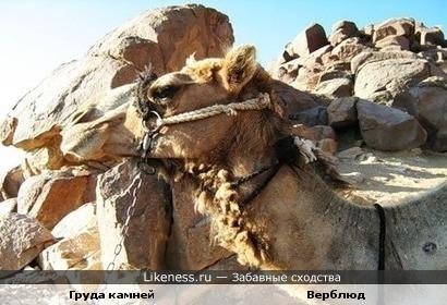 Груда камней похожа на верблюда (из личных фото)