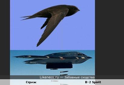 Птица похожа на самолет-бомбардировщик