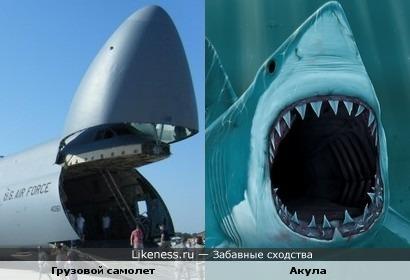 Самолет и акула весьма прожорливы