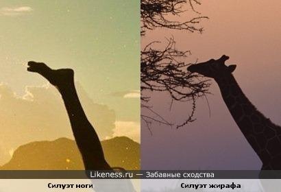 Силуэт ноги похож на жирафа