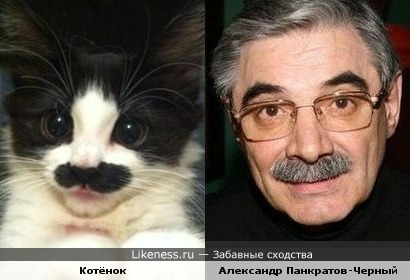 Александр Панкратов-Чёрный похож на котэ