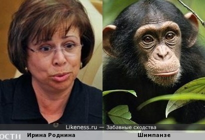 Выдающаяся обезьяна Российской Федерации