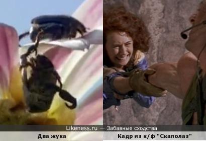 Кадр из фильма скалолаз и два жука