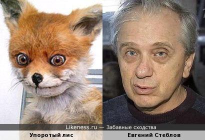 Упоротый лис и Евгений Стеблов
