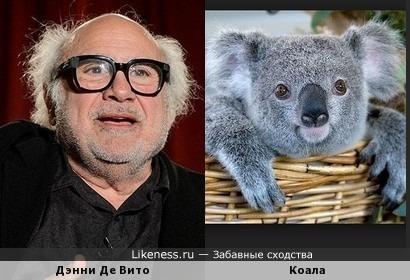 Дэнни Де Вито похож на коалу