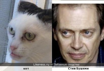 Кот и Стив Бушеми
