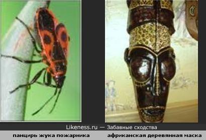 панцирь жука пожарника похож на африканскую деревянную маску