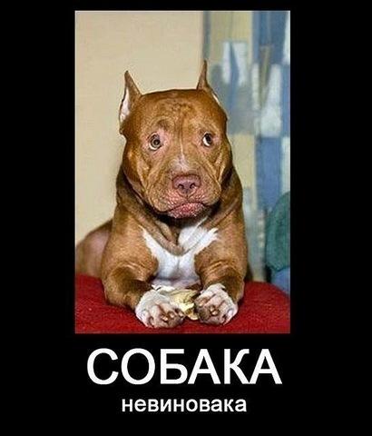 Собака-невиновака