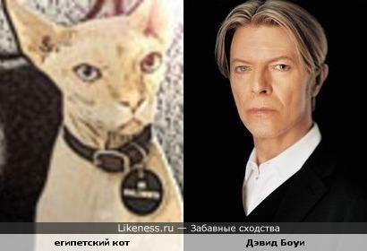 Этот кот похож на Дэвида Боуи