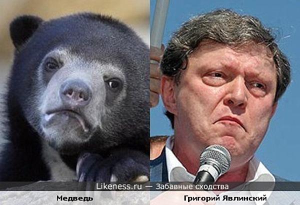 Медведь похож на Григория Явлинского