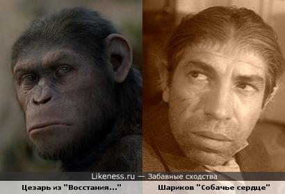 """Цезарь из """"Восстания планеты обезьян"""" похож на Шарикова из """"Собачьего сердца"""""""