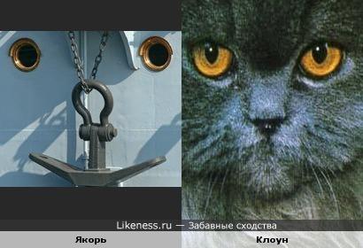 Что общего у корабля и кота?