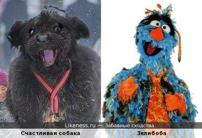 Счастливая собака похожа на Зелибобу