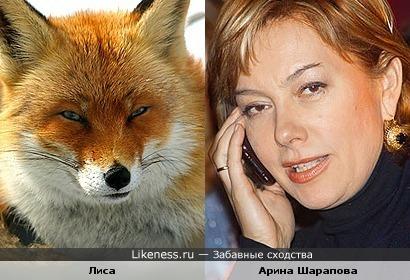 У Арины Шараповой хитрое лисье лицо