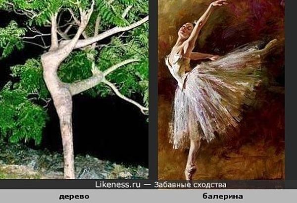 дерево похоже на балерину