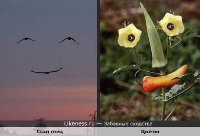 Стая птиц в виде улыбки похожа на цветы в виде улыбки)))))