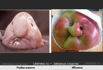 Рыба-капля похожа на яблоко.