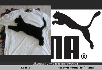 Кошка похожа на пуму