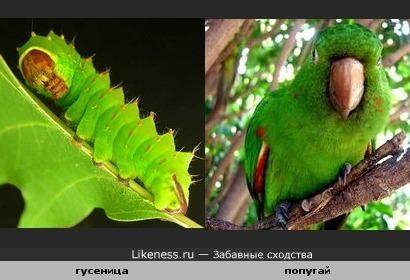 Серьезная гусеничка и серьезный попугай